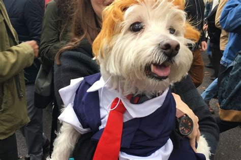 The Tompkins Square Halloween Dog Parade was the best day